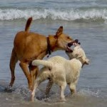 playa mordeduras2