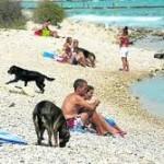 playas mordeduras3
