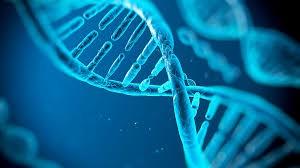 epigenetica5