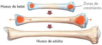 cartilago1